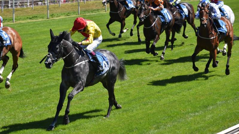 Parys Mountain defies the odds to win at York