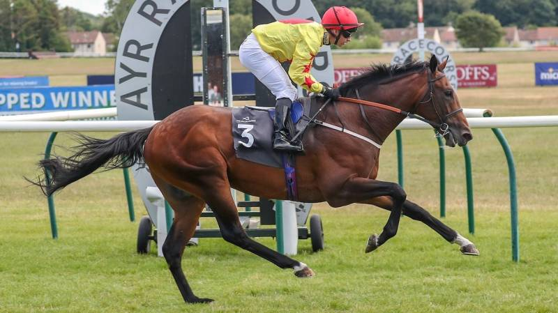 Brother McGonagall completes the hat-trick at Ayr