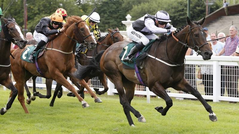 Midnight Malibu finishes strongly to win at Ripon