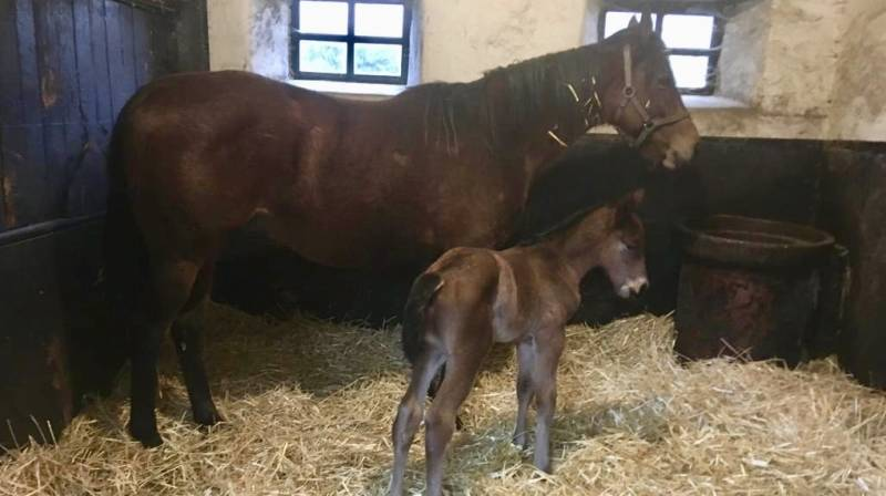 Midnight Mojito has a colt foal by the sire Buratino