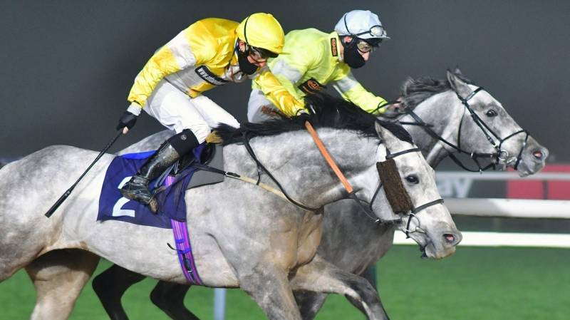 AMADEUS GREY gets up in the final strides to win at Southwell